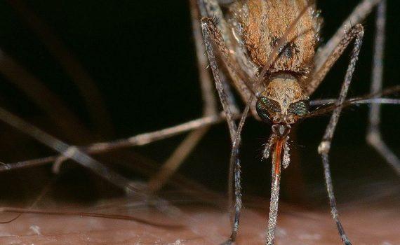 moustiquaire contre les moustiques